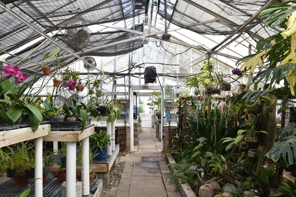 Photograph of the Cranbrook House & Gardens Conservatory Greenhouse Orchid Room.
